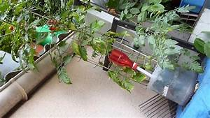Bac Reserve D Eau : tomates cerise en bac r serve d 39 eau bidon de 5l r cup r youtube ~ Melissatoandfro.com Idées de Décoration