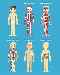 How Your Body Systems Are Connected