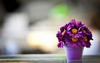 Flower Pot Pretty Wallpapers Backgrounds 4k Bsnscb