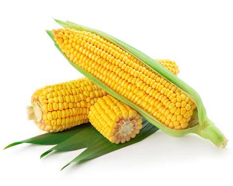 corn on the cob corn on the cob simply bbq