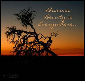 because, beauty, is, everywhere