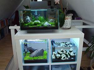 Aquarium Unterschrank Ikea : ikea expedit with aquarium google search fish tank stand tropical fish aquarium betta aquarium ~ Watch28wear.com Haus und Dekorationen