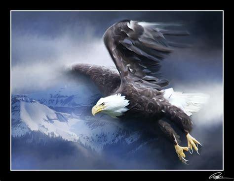 flight   eagle eagle images eagle  flight eagles