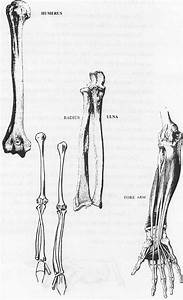 Image Gallery human arm drawing