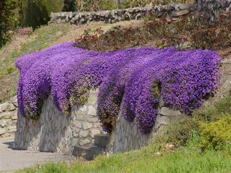 plante dans chambre à coucher plantes vivaces magnifiques dans votre jardin