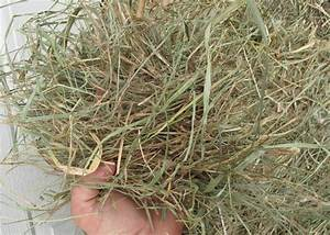 #3002 Timothy Grass Mix Hay in 2 String Bales | Aden Brook ...