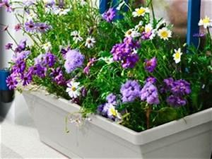 Jardiniere Fleurie Plein Soleil : jardini re tous nos sujets ~ Melissatoandfro.com Idées de Décoration