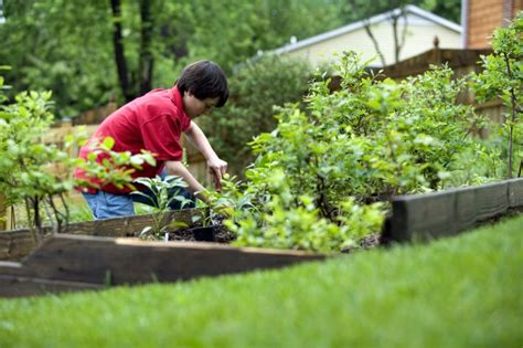 need a gardener how to grow all the food you need on just half an acre off the grid news