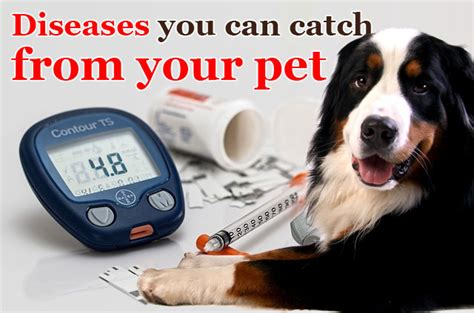 Diseases You Can Catch From Your Pet  Did You Know Pets