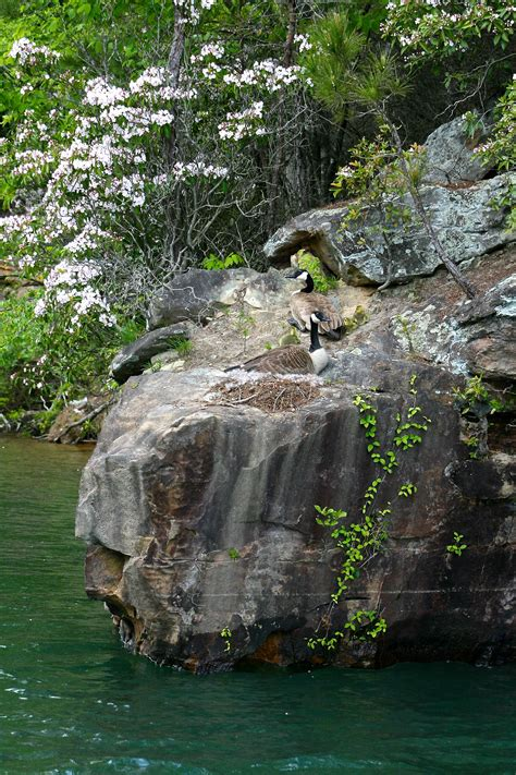Lake accomodations in alabama (alphabetical). Smith lake vacation. Top Lewis Smith Lake Vacation Rentals ...