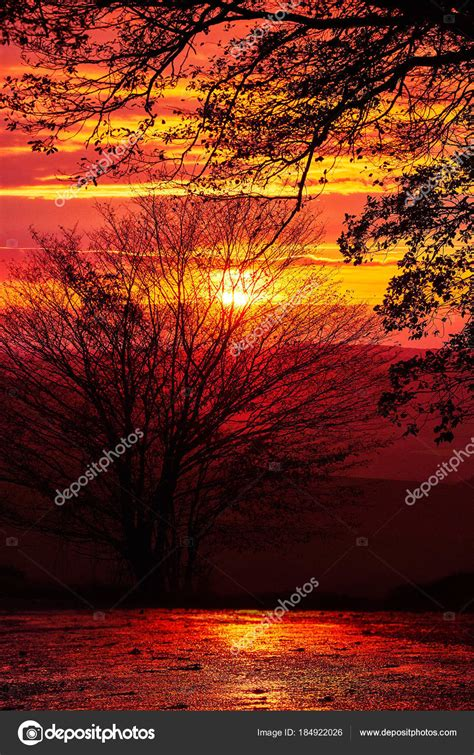 bild paisajes paisajes  arboles rojos