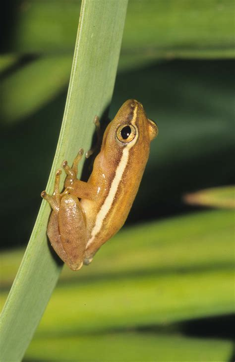 cute frog   week amphibian rescue  conservation