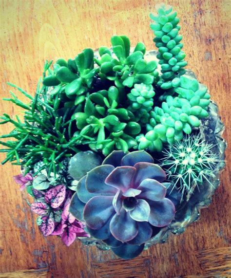 Zimmerpflanze Rote Blätter by Robuste Zimmerpflanzen Beliebte Pflegeleichte Topfpflanzen
