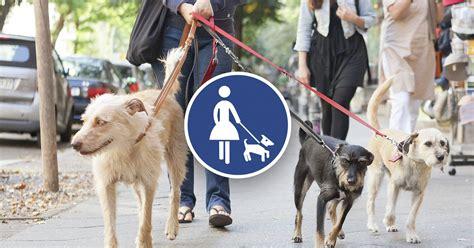 Hunde Gassi Service Berlin