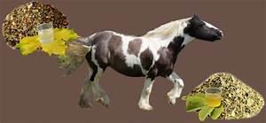 Bilder Von Pferden : kr uter f r pferde ~ Frokenaadalensverden.com Haus und Dekorationen