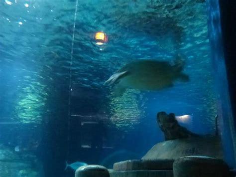 marne la vallee aquarium tortue picture of aquarium sea val d europe marne la vallee tripadvisor