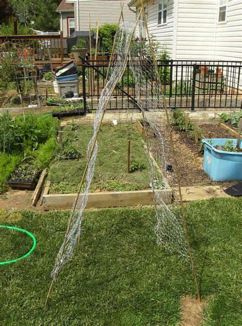 Low Garden Trellis by How To Build A Low Cost Vegetable Garden Trellis