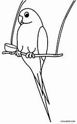 Parrot Coloring Pages Bird Drawing Flying Printable Birds Parrots Colouring Parakeet Preschoolers Cool2bkids Green Dummy Print Simple Getdrawings Getcolorings Clipartmag sketch template