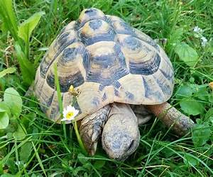 Große Reptilien Für Zuhause : reptilien tierarztpraxis roman schneider weiterstadt ~ Lizthompson.info Haus und Dekorationen