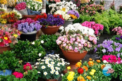 fiori in italia domicilio ci italia floraqueen trento ca spedire fiori