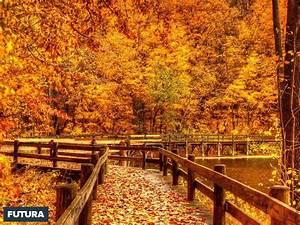 fond d39ecran automne dore With forum plan de maison 13 fond decran feuilles dautomne
