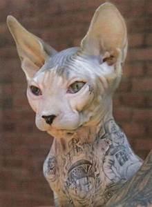Signification Animaux Tatouage : animaux tatouage ~ Dode.kayakingforconservation.com Idées de Décoration