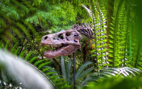 jungle animals forest dinosaur trees wallpapers bones skeleton skulls background hd mobile colourful horror animal backgrounds desktop wallpaperup sign log