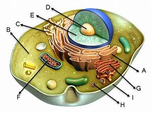 Review The Diagram Of The Animal Cell Given Below And
