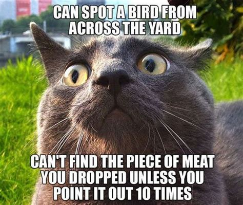 Random Meme - random funny memes 20 pics