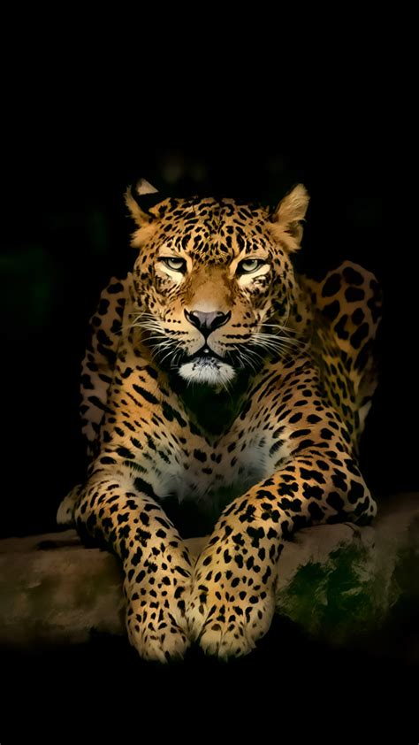 Jaguar Animal Iphone Wallpaper - leopard iphone wallpapers leopard wallpaper
