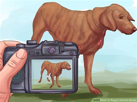 report animal abuse  steps  pictures wikihow