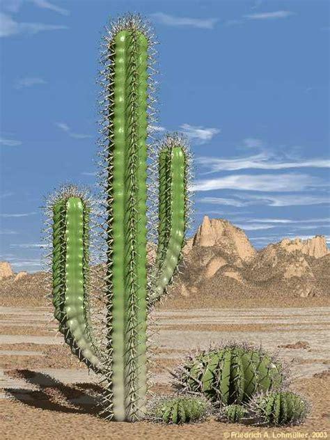pics of cacti cactus link collection masaru kaido