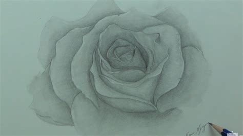 drawing  rose  life time lapse youtube