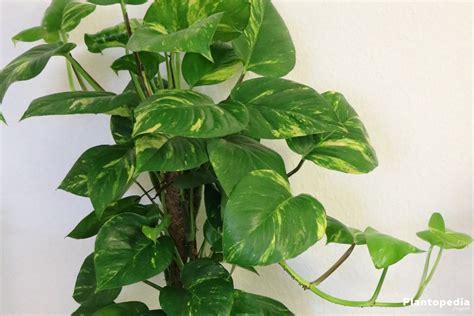 indoor plants low light best indoor plants low light low light houseplants plantopedia