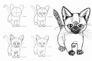 Review: How to Draw Cats and Kittens: A Complete Guide for ...