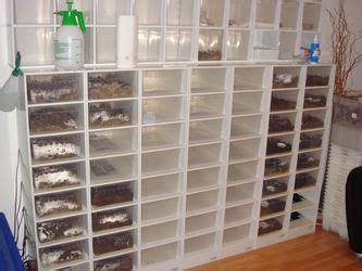 pythonking kunststoffterrarien racks zubehoer brutapparat tageslichtlampen heizmatten