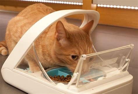 futterautomat katze chip katze chippen lassen vorteile und nachteile katzen chippen