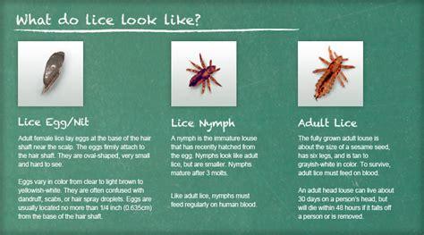 recognize lice lice removal  treatment