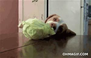 Funny Dog Eating GIFs - Find & Share on GIPHY