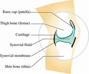 Knee Synovial Joint Diagram, Knee, Free Engine Image For ...
