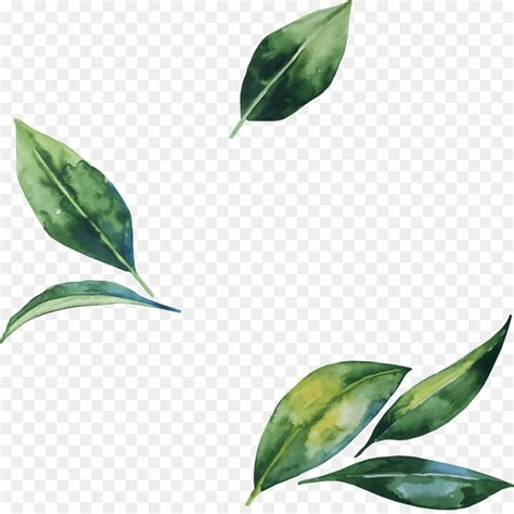 leaf flower illustration hand painted watercolor leaves