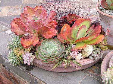 planting succulents in containers growing succulents in containers gardener s supply 4262