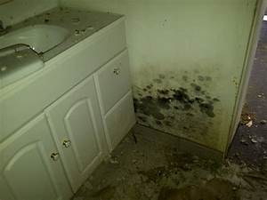 what is mould or mold mold awareness With bathroom mildew removal