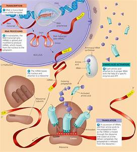 Sl 1 Biology