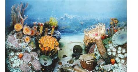 plants   ocean  kids childhood education