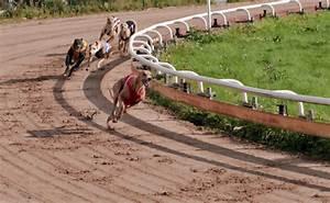 greyhound dog racing tracks florida 74 dogs d