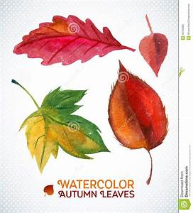 Watercolor Autumn Leaf Set. Vector Illustration Collection ...