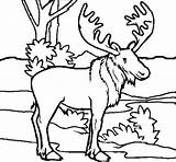 Moose Coloring Colouring Printable Picolour Getcolorings sketch template
