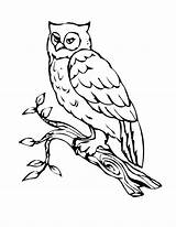 Owl Coloring Pages Bird Birds Printable Outline Print sketch template
