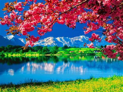 Wallpaper Of Nature by Amazing Nature Wallpapers Beautiful Nature Hd Live